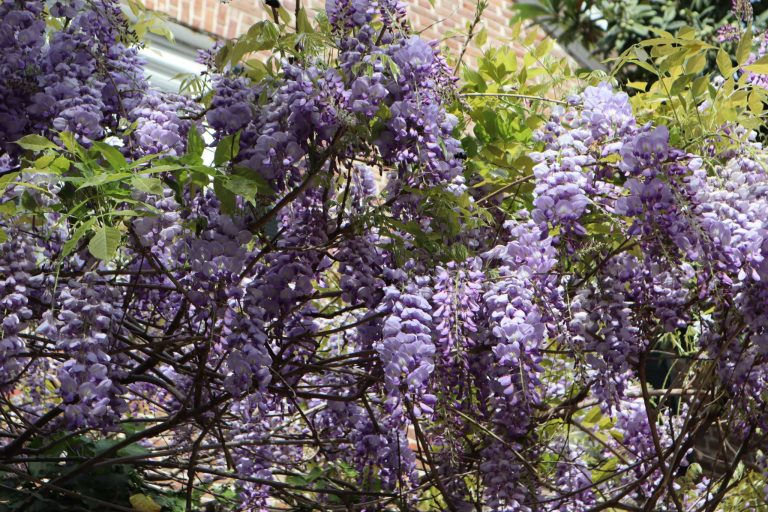 A group of purple flowers on a tree