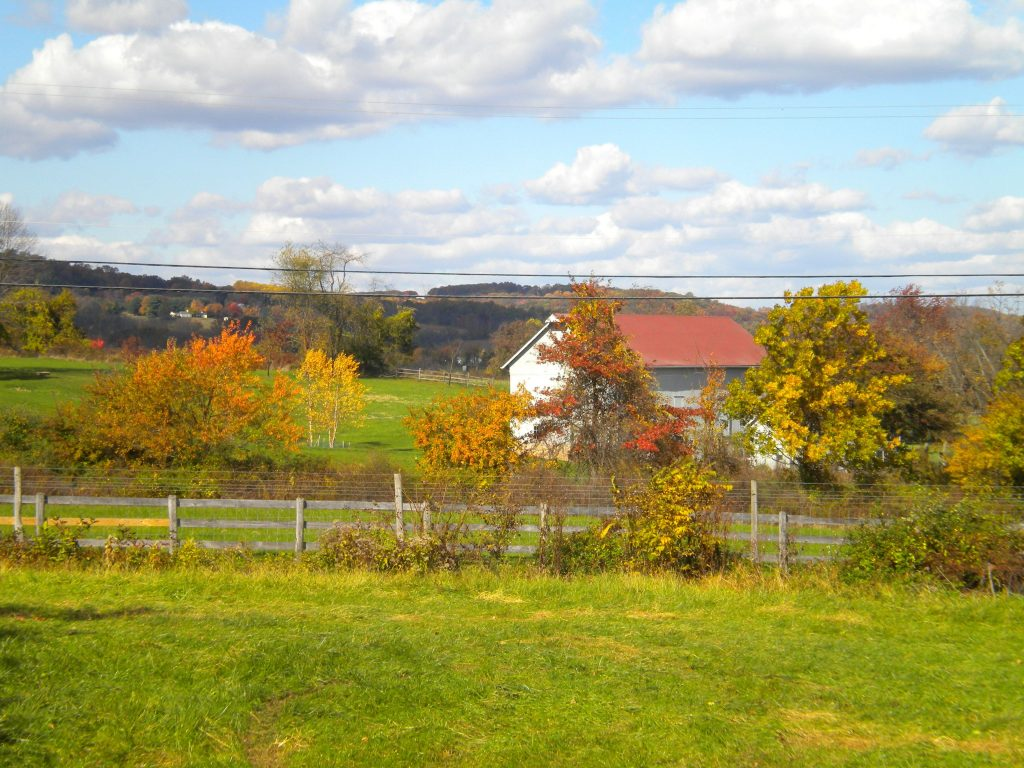 field in autumn in New Jersey