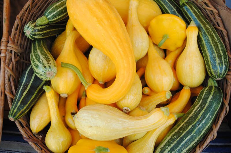 basket of yellow squash, crook neck squash, summer squash, zucchini