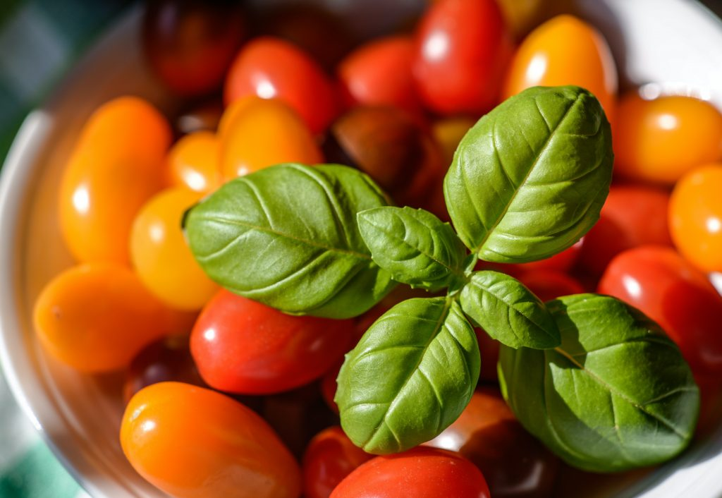 basil plant in bowl of tomatoes